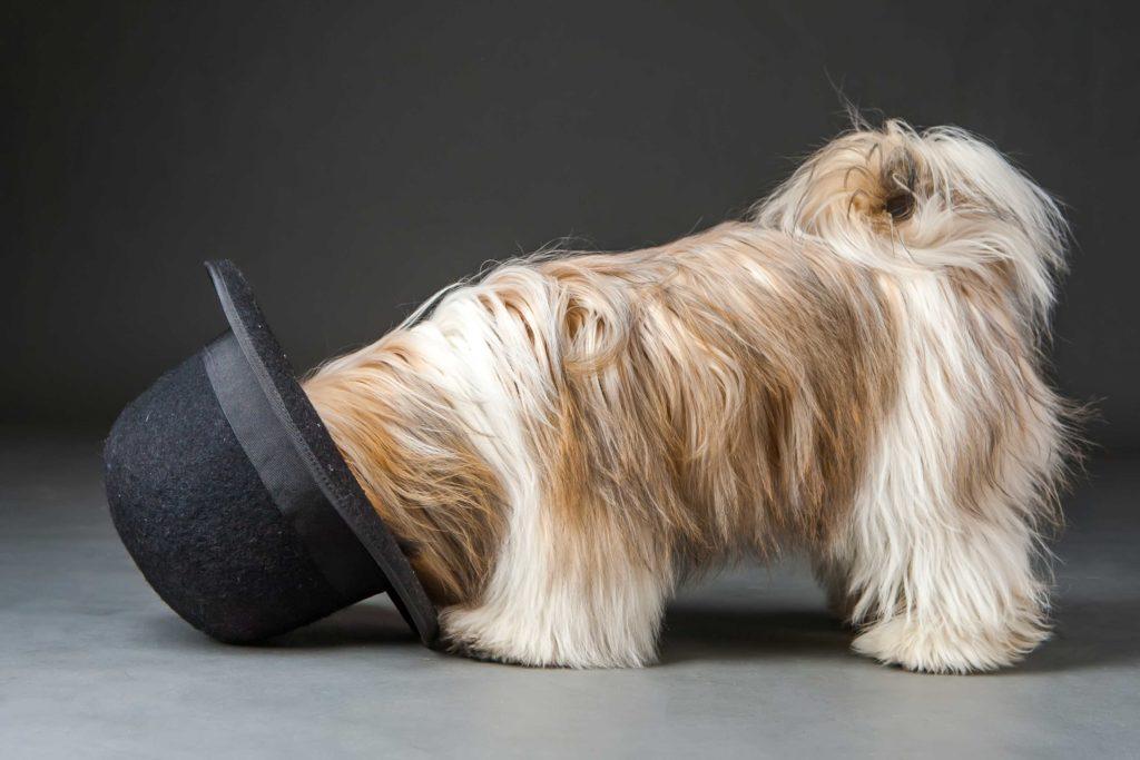 Beware Black Hat SEO