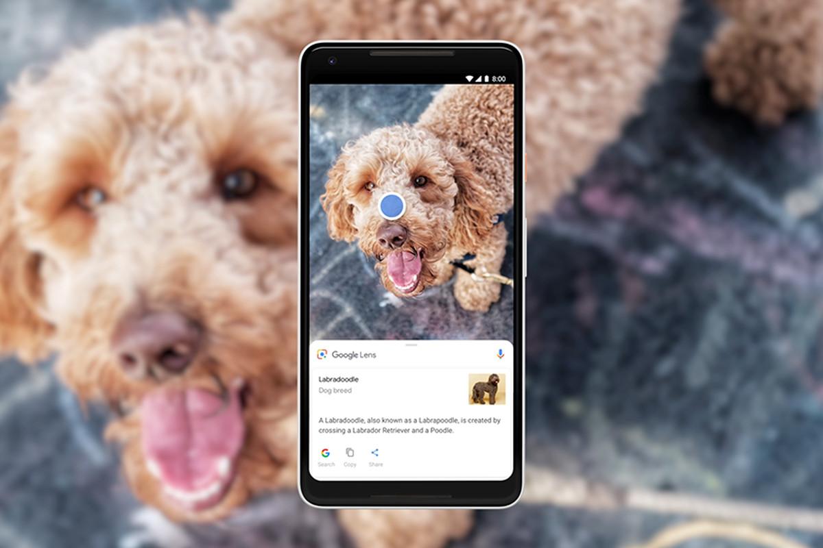 google_lens_dog