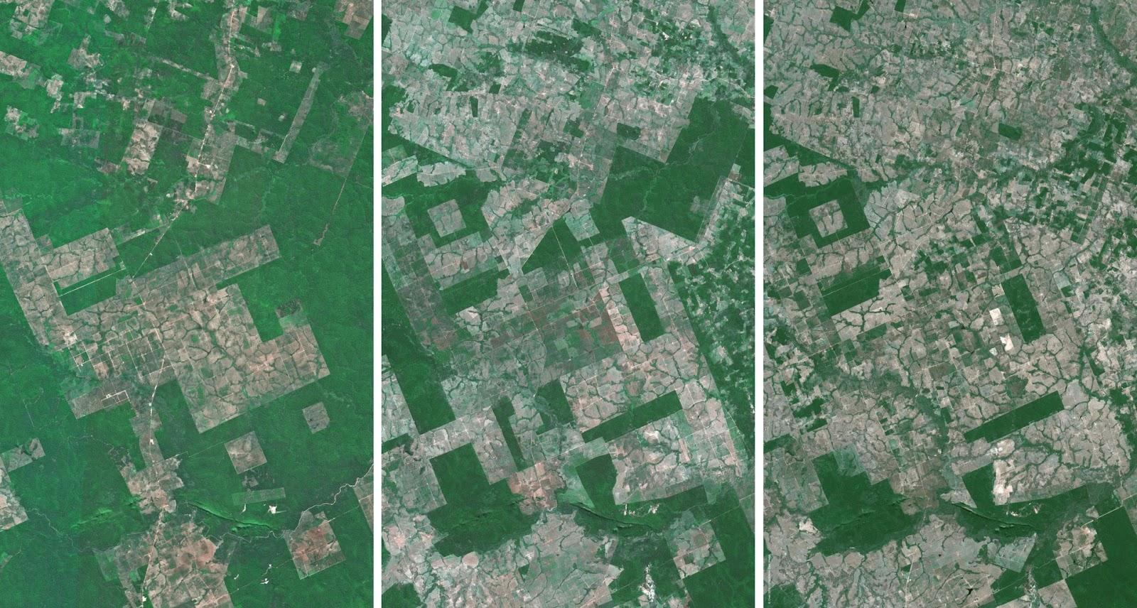 Global Forest Watch - deforestation